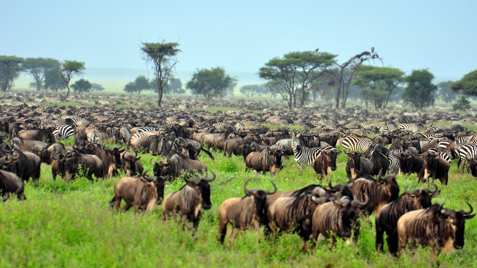 Special discount on Serengeti tour!