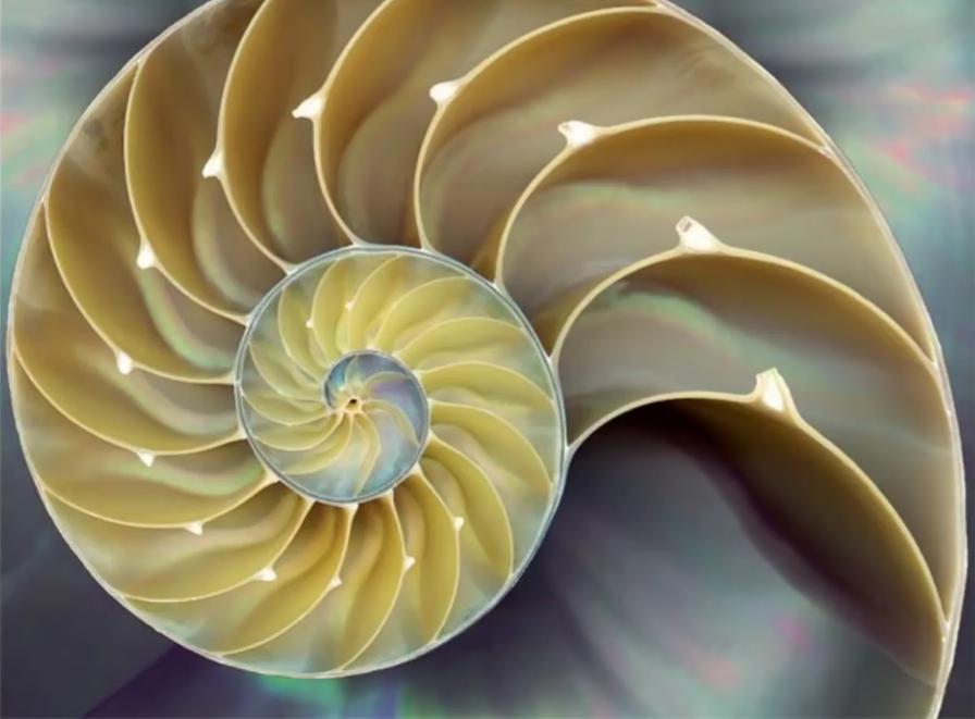 Sacred Spiral Yoga
