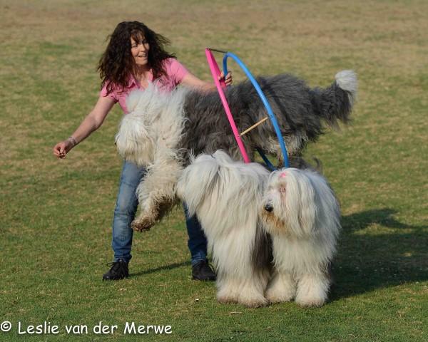 JOY Dogs show