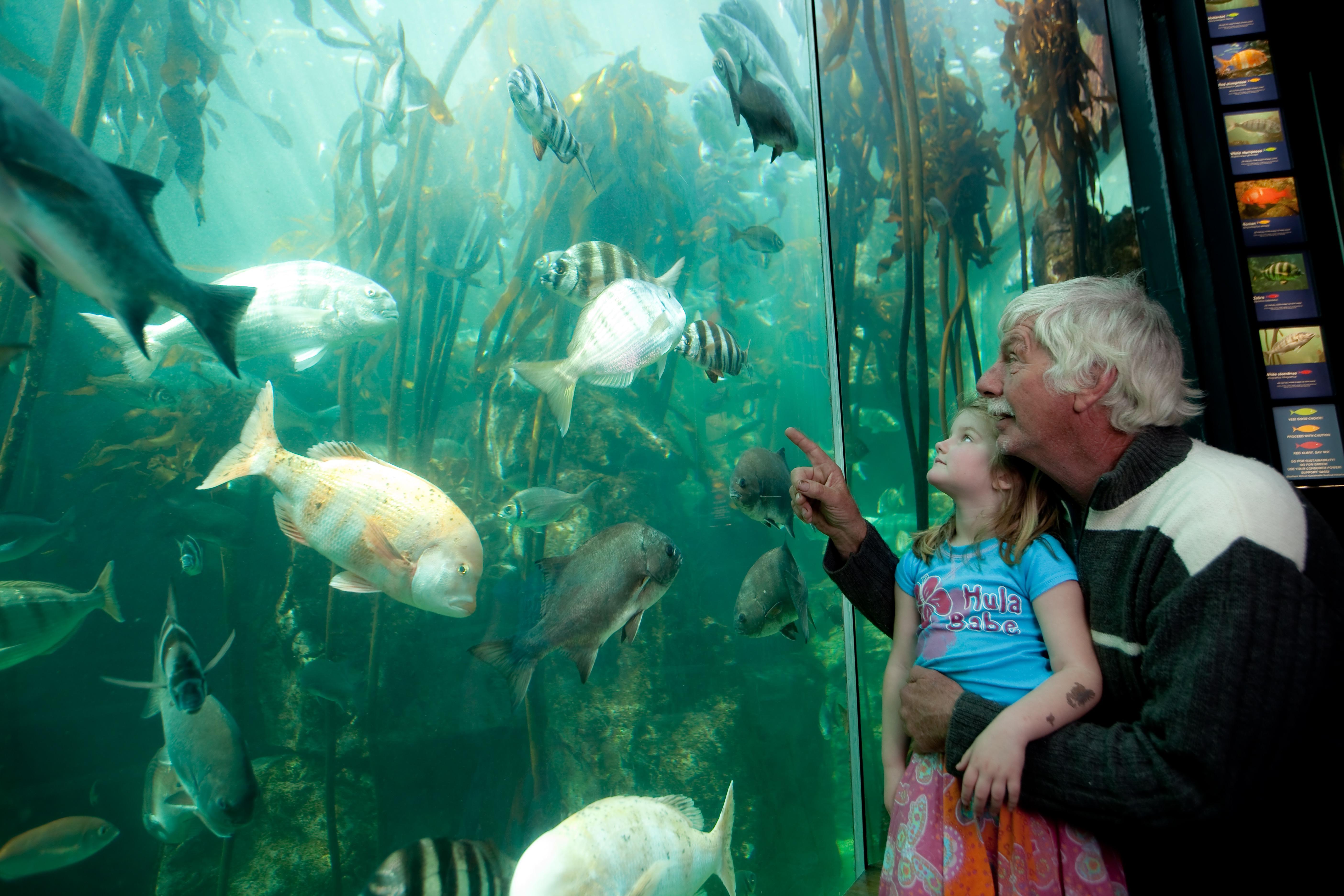 Pensioners discount at the Two Oceans Aquarium