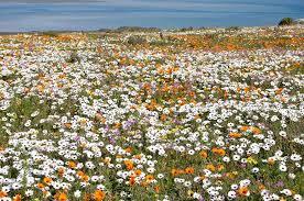West Coast Flowers Day Trip – September